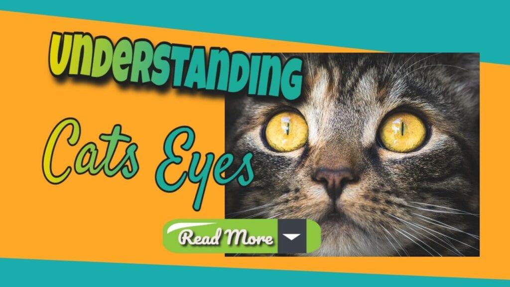 Understanding cats eyes read more