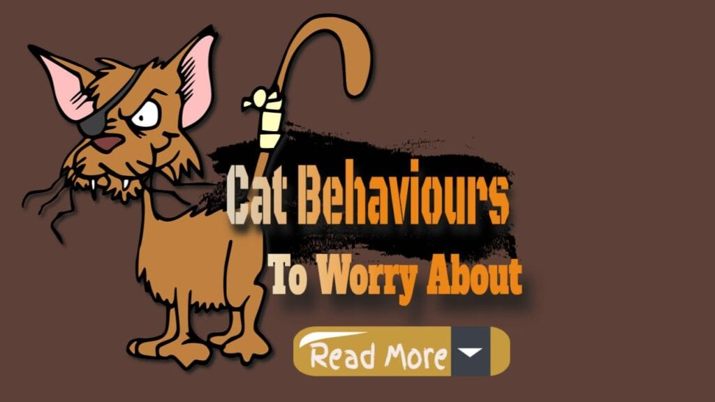 cat behaviours to worry about read more