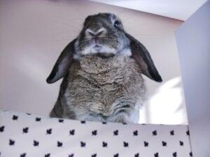 rabbit sitting in a box