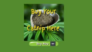 buy-your-catnip-here-buy-now-