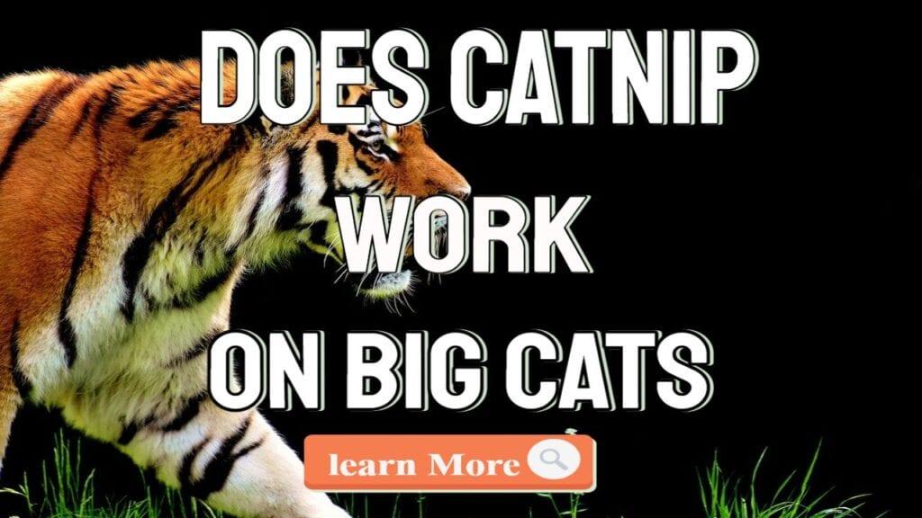 does catnip work on big cats